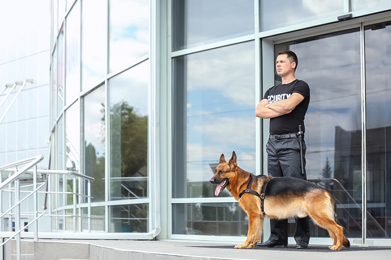 Security Guard Cv in Lancaster Lancashire